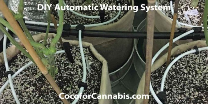 Diy Automatic Watering System For Indoor Cannabis Coco For Cannabis