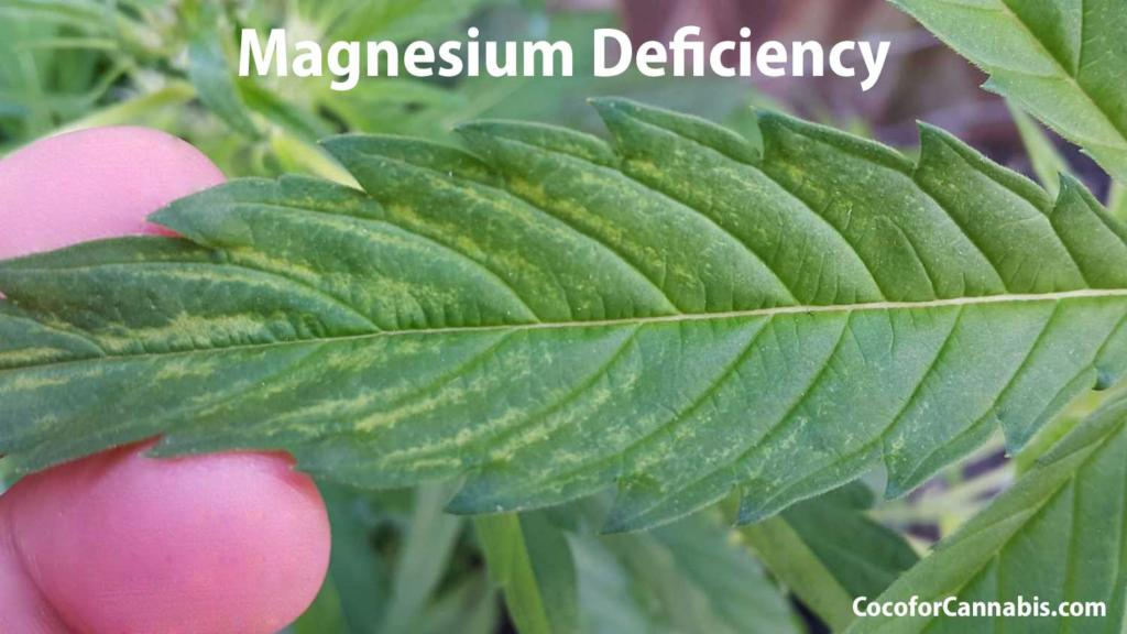 Cannabis Magnesium Deficiency