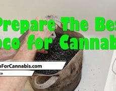 Prepare the Best Coco for Cannabis