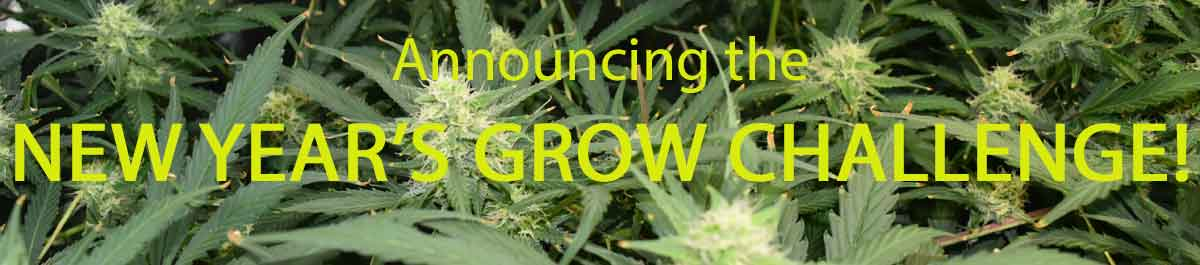 Announcing the New Year's Grow Challenge