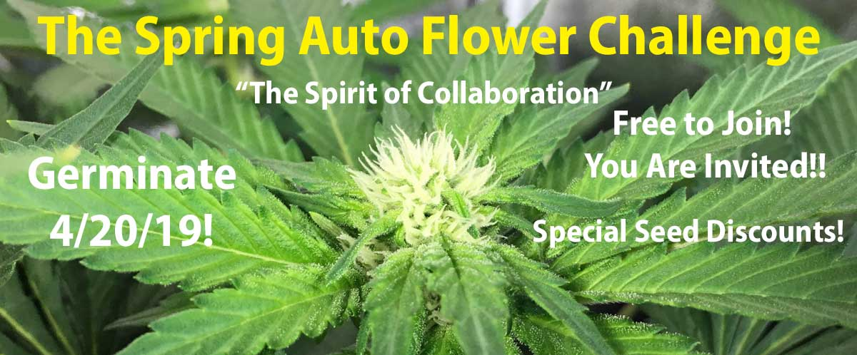 The Spring Auto Flower Grow Challenge