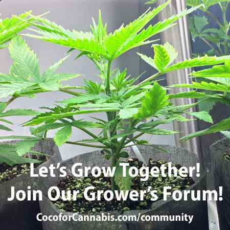 Coco for Cannabis Grower's Forum